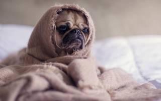 Какие бывают гельминтозы у собак?