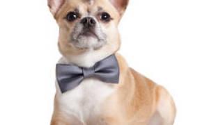 Как отучить пса от похотливого поведения