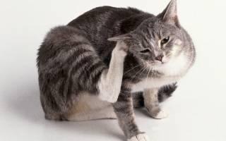 Внутренние паразиты у кошек