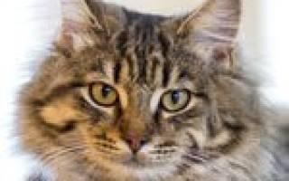 Основы воспитания кошки