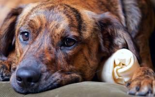 Панкреатит  — как лечить у собак