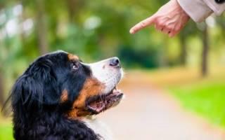 Как стать вожаком стаи, чтобы контролировать поведение своей собаки