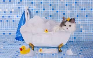 Как правильно купать котенка?