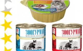 Обзор корма для кошек Зоогурман