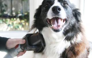 Автогаджеты для собак
