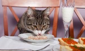 Соль в рационе кошек