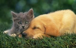 Миелит (воспаление спинного мозга) у кошки