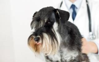 Дерматит контактный — как лечить у собак
