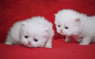 Как назвать кошку белого цвета?