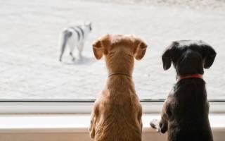 Как отучить собаку гоняться за кошками