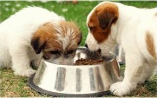 Кормление собак: от щенка до взрослой особи. Инструкция