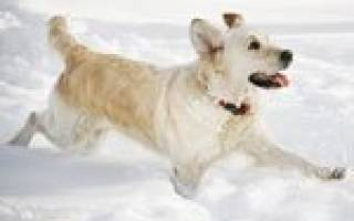 Как защитить собаку от холода и мороза зимой