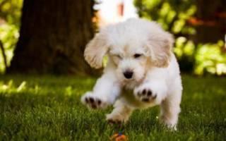Гепатоджект для собак — инструкция по применению