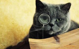 Какие породы кошек считаются самыми умными?