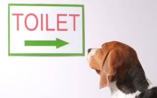 Как приучить маленькую собачку ходить в туалет на газету
