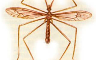 Гнус (слепни, комары, мошки, москиты, мокрецы) — как лечить у собак