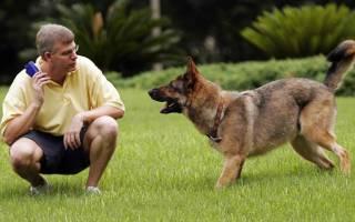 Как наказать собаку