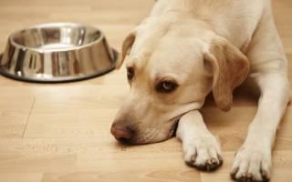 Как заставить собаку перестать есть грязь