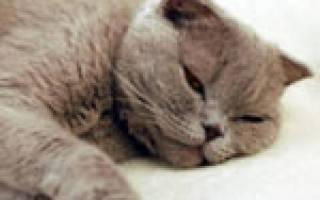 Гастрит кошек