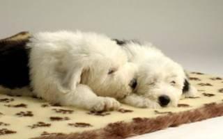 Как выбрать лежанку для щенка