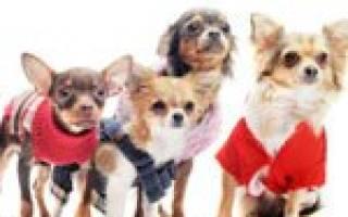 Как выбрать одежду для собаки?