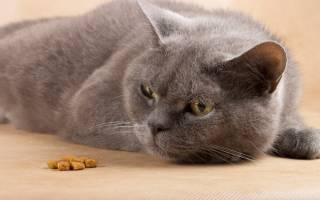 Почему кошка перестала есть сухой корм?