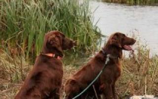 Как научить собаку не убегать со двора