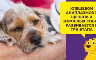 Цестал для собак — инструкция по применению