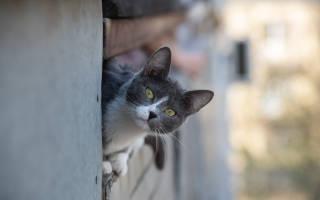 Когда седеют кошки?