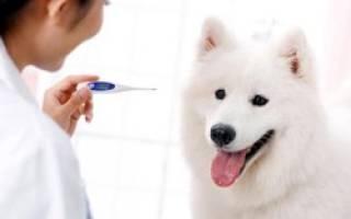Как измерить температуру щенку?