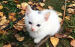 Ветеринарные процедуры для котят