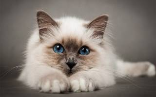 Обзор корма для кошек Wahre Liebe
