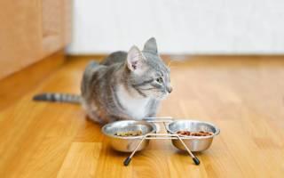 Обзор корма для кошек Pro Cat
