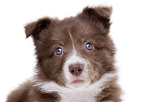 Воспитание собаки: подкрепление