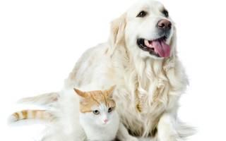 Котёнок и щенок в одной квартире