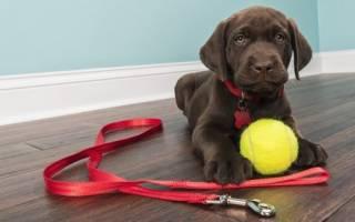 Как обучить собаку помощника без профессионального тренера