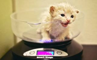 Оптимальный вес кошки