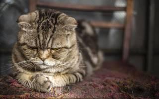 Стресс у кошки. Что делать?