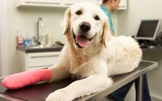 Раны  — как лечить у собак