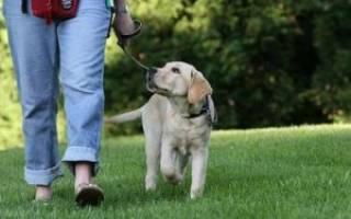 Прогулки со щенком: 5 правил техники безопасности