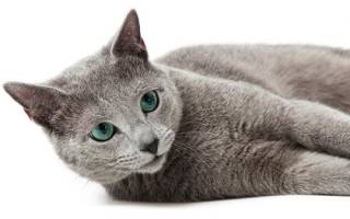 Имена по характеру котов