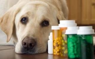 Пиометра, Миксометра, Эндометрит  — как лечить у собак