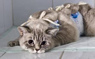 Как ухаживать за кошкой после наркоза?