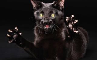 Кошка ведет себя агрессивно. Что делать?