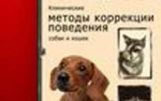 Как изменить деструктивное поведение собаки