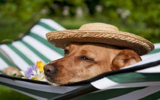 Как помочь своей собаке полностью расслабиться