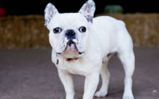 Как остановить агрессивное поведение собаки