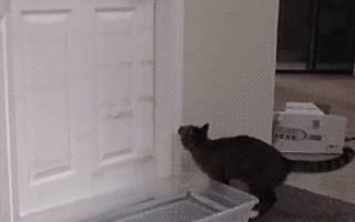 Кошка постоянно открывает дверь. Что делать?