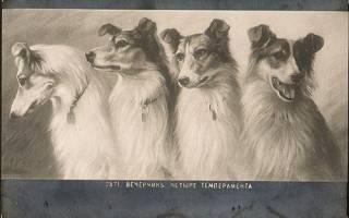 Типы темпераментов щенков