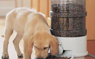 Как выбратьавтокормушку для собаки?
